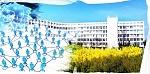 Севастополь  как средоточие «интеллектуальных сетей»